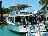 Dive with Sharks on Bimini